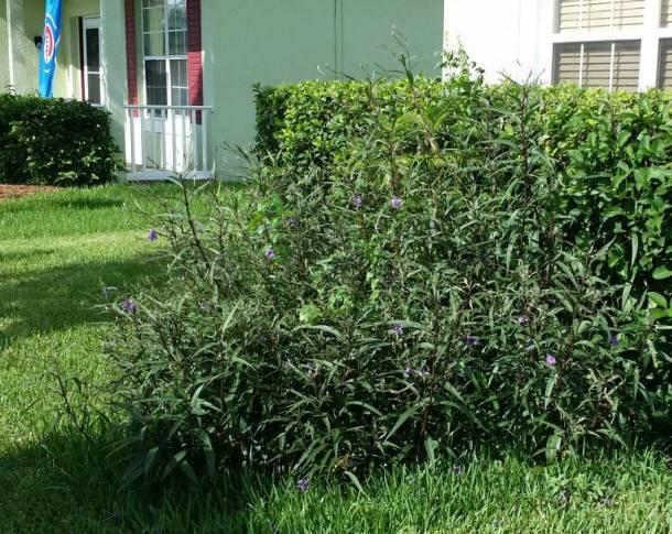 fire bush 2