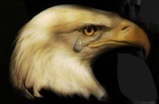 Eagle Crying