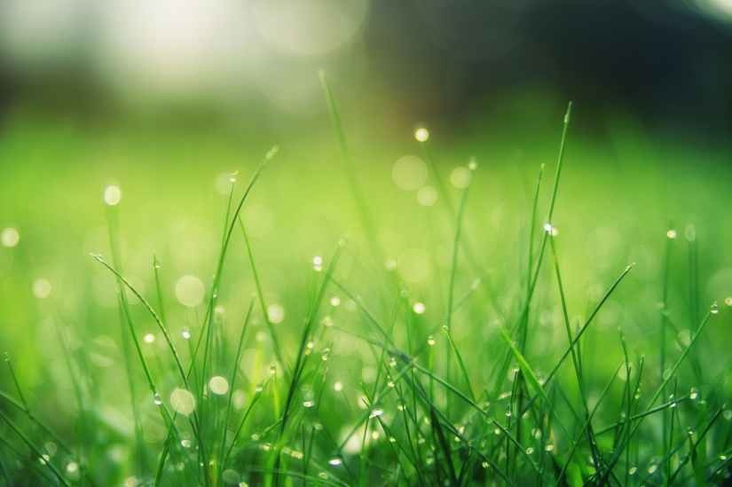 closeup photo of green grass field